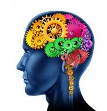 brain-cogs