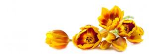 flower-faqs
